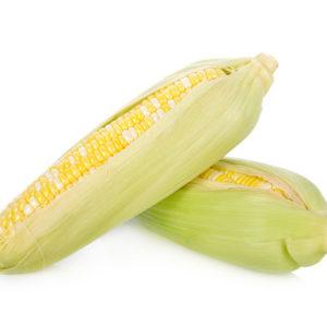 Fresh Bicolors Sweet Corn On White Background