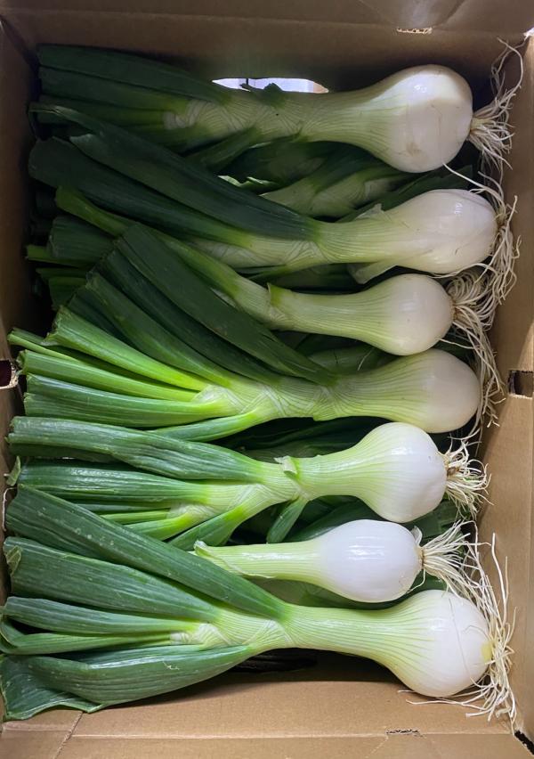 Local-bulb-onion